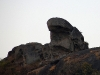 monkey-on-toad-rock