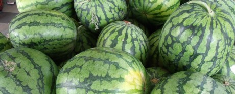 Water_Melons